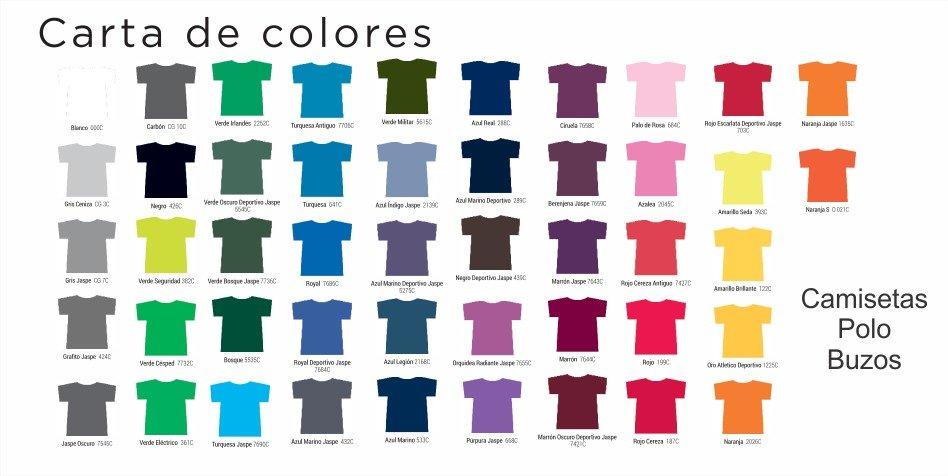 polos, buzos, camisetas